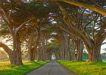 Tree tunnel, California