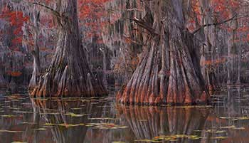 Louisiana swamps